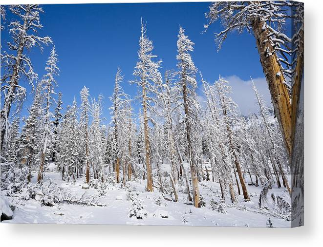 Winter Canvas Print featuring the photograph Winter by Kelley King