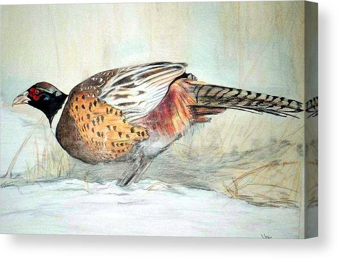 Ringneck Pheasant Canvas Print featuring the painting Winter Ringneck by Debra Sandstrom