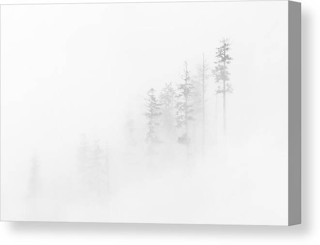 Winter Canvas Print featuring the photograph Winter Veil by Mike Dawson