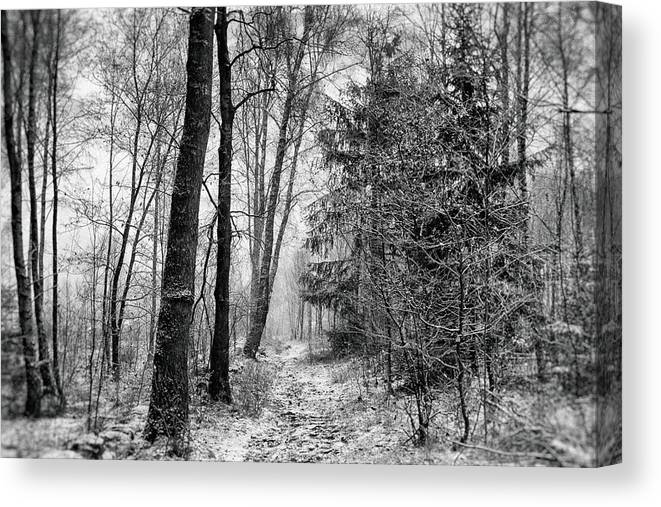 Black And White Canvas Print featuring the photograph Winteress by Karen Stahlros