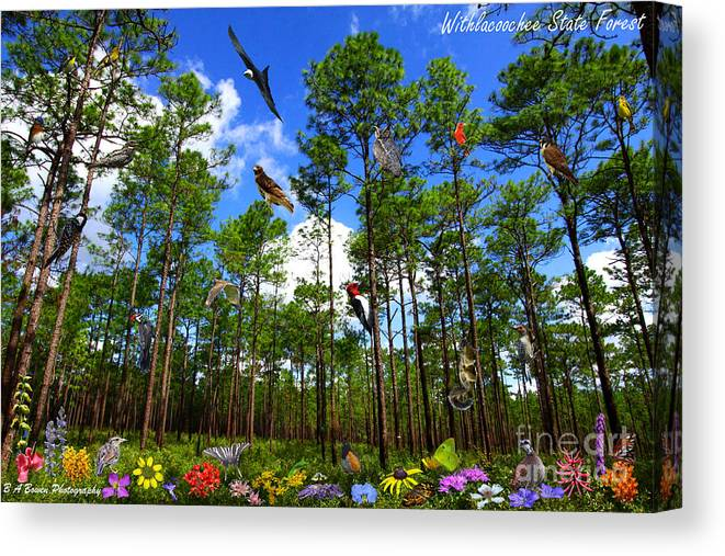 Withlacoochee State Forest Canvas Print featuring the photograph Withlacoochee State Forest Nature Collage by Barbara Bowen