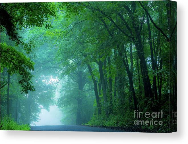 Wood Woods Mist Morning Beaver Creek State Park Ohio Tree Canopy Leaves Canvas Print featuring the photograph Woodland Mist by Darren Walker