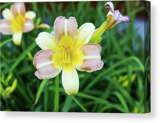 Daylily Canvas Print featuring the photograph Yellow Daylily by D K Wall