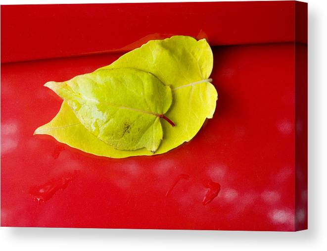 Yellow Canvas Print featuring the photograph Yellow Leaves by Karen Ulvestad