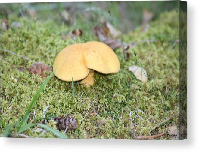 Mushrooms Nature Plants Wild Moss Acorns Forest Canvas Print featuring the photograph Yellow Mushroom by Andrea Lawrence