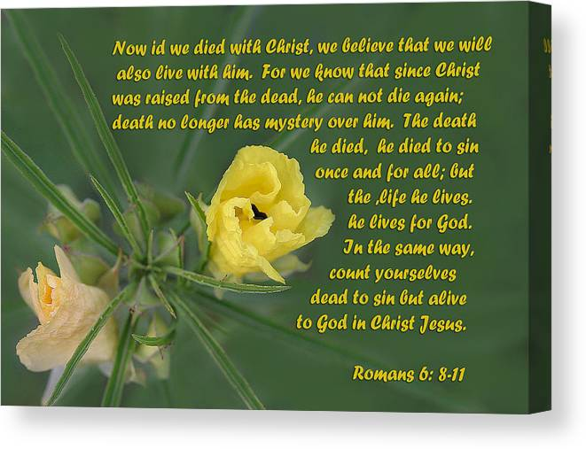 Scripture Canvas Print featuring the photograph Yellow Wildflower - Romans by Linda Phelps
