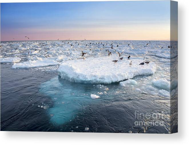 Japan Canvas Print featuring the photograph Drift Ice In Shiretoko, Hokkaido, Japan by Zincreative