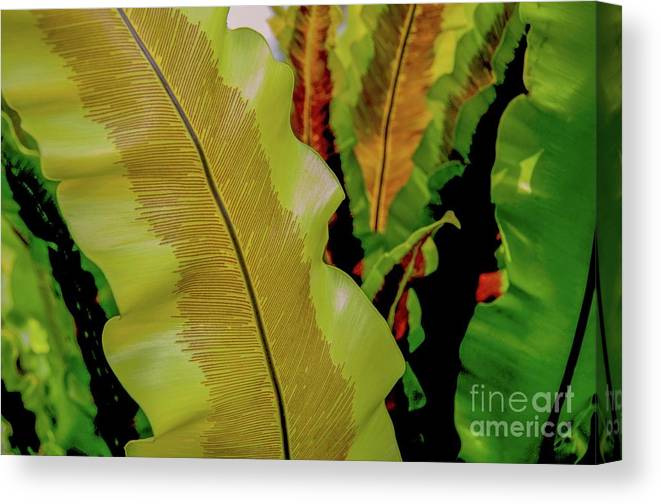 Plants Canvas Print featuring the photograph Plants And Leaves Hawaii by D Davila