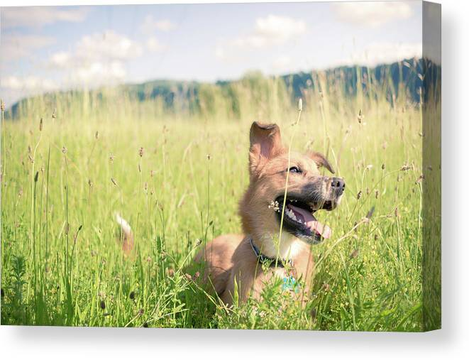Dog Canvas Print featuring the photograph A Dog In The Park by Nicole Young