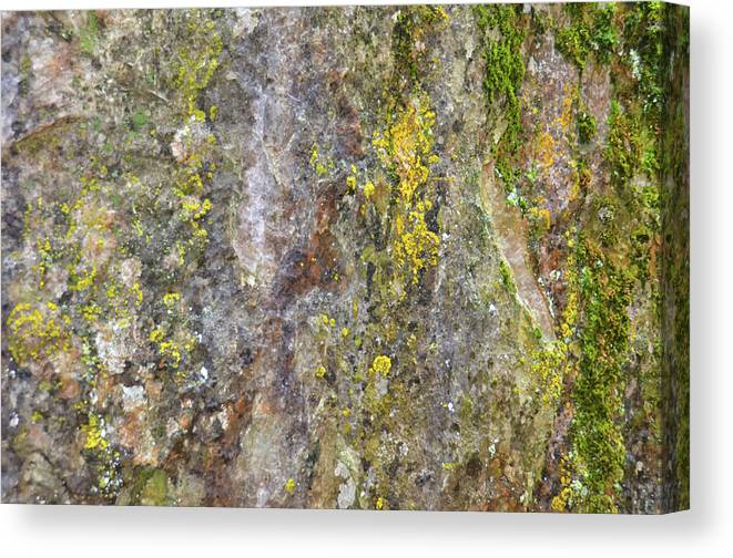 Nature Canvas Print featuring the mixed media Along The Trail 3 by Angelina Tamez