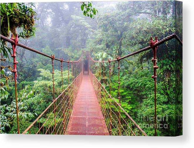 Forest Canvas Print featuring the photograph Bridge In Rainforest - Costa Rica - by Simon Dannhauer
