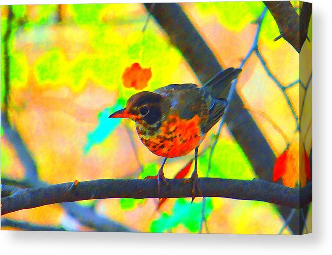 Brushed Robin Canvas Print featuring the photograph Brushed Robin by Edward Swearingen