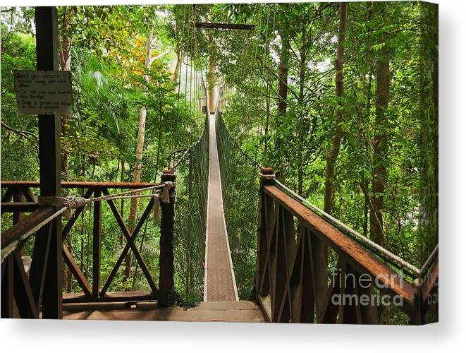 Forest Canvas Print featuring the photograph Canopy Walkway. Taman Negara National by Elena Odareeva