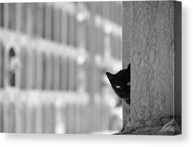 Pets Canvas Print featuring the photograph Cat In Cemetery by All Copyrights Reserved By Harris Hui