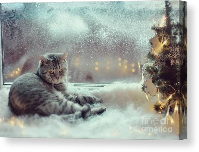 Pets Canvas Print featuring the photograph Cat In The Winter Window by Alekuwka