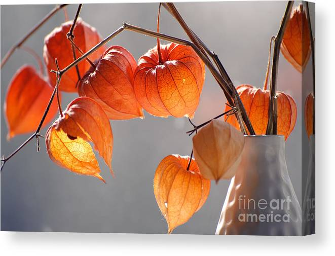 Delicate Canvas Print featuring the photograph Closeup Of Delicate Physalis Flowers by Podlesnyak Nina