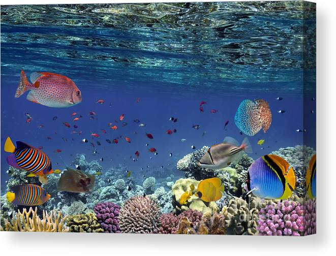 Sulawesi Canvas Print featuring the photograph Colorful Reef Underwater Landscape With by Vlad61