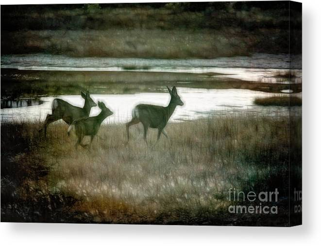 Yosemite Canvas Print featuring the photograph Deer Gallop Yosemite National Park by Chuck Kuhn