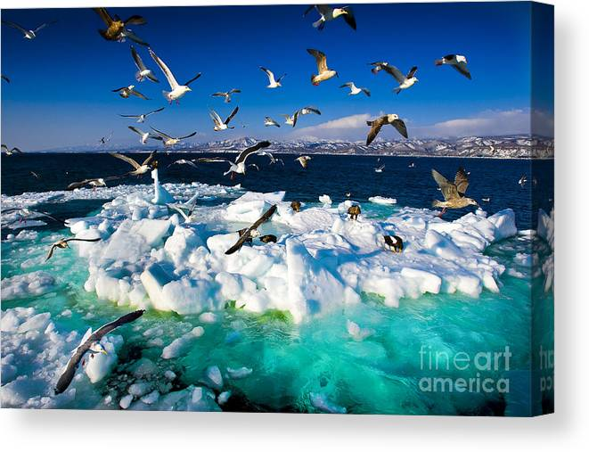 Untouched Canvas Print featuring the photograph Drift Ice by Kei Shooting