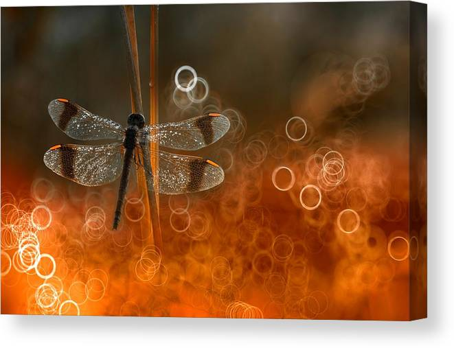 Macro Canvas Print featuring the photograph Fenix by Wil Mijer