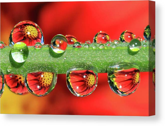 Water Drops Canvas Print featuring the photograph Firey Drops by Gary Yost