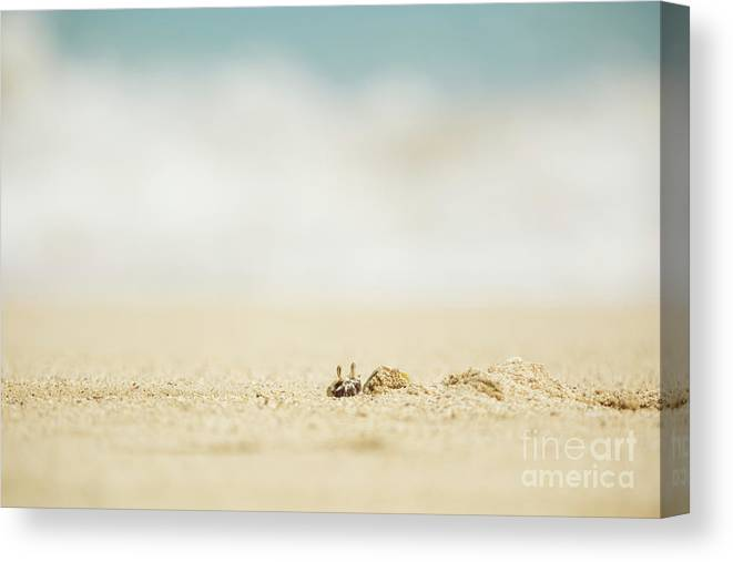Hawaii Canvas Print featuring the photograph Ghost Crab Emerging From Hole In Sand by Charmian Vistaunet