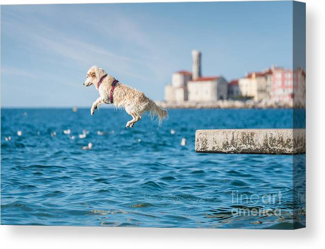 Play Canvas Print featuring the photograph Golden Retriever Dog Jumping Into Sea by Sonsart