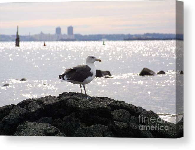 Lone Gull Stands On Rock Canvas Print featuring the photograph Gull Isle II by Darren Dwayne Frazier