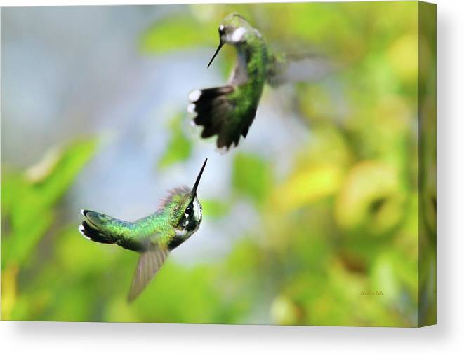 Ruby Throated Hummingbird Canvas Print featuring the photograph Hummingbirds Ensuing Battle by Christina Rollo