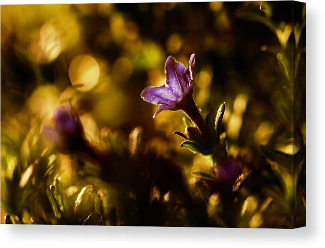 Flower Canvas Print featuring the photograph La Primavera by Fabien Bravin