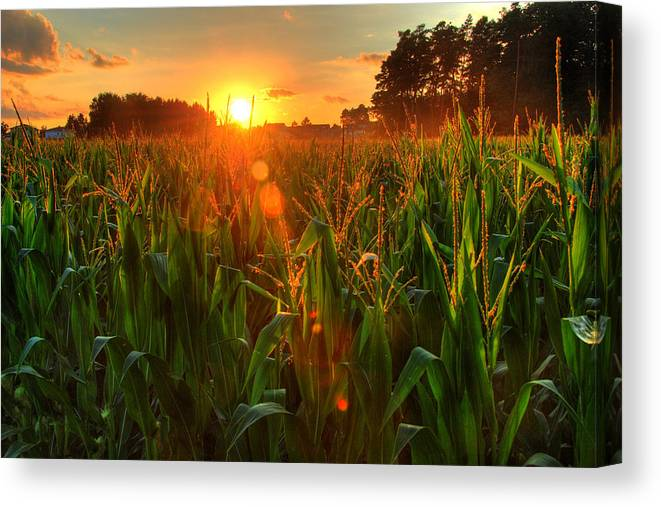 Outdoors Canvas Print featuring the photograph Late Summer Sunset Over The Harvest by Richard Fairless
