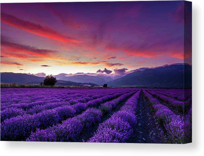Dusk Canvas Print featuring the photograph Lavender Season by Evgeni Dinev