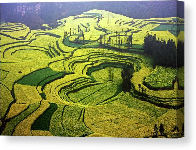 Natural Pattern Canvas Print featuring the photograph Luoping Rape Flower Fields by Photographed By Lan Yin