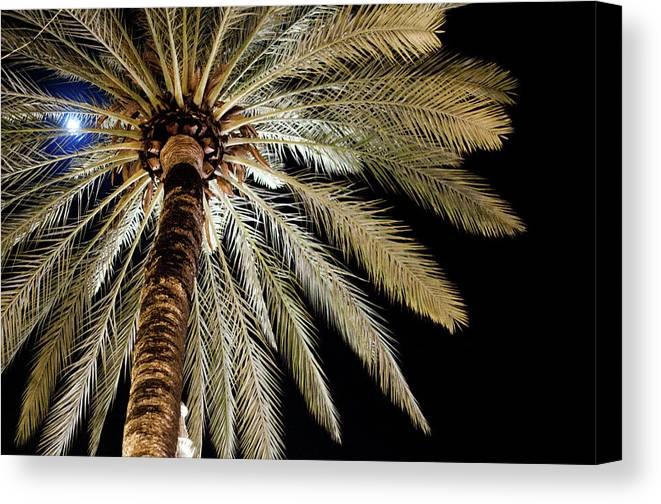 Outdoors Canvas Print featuring the photograph Moon Through Palm Tree by Photo By Stuart Gleave