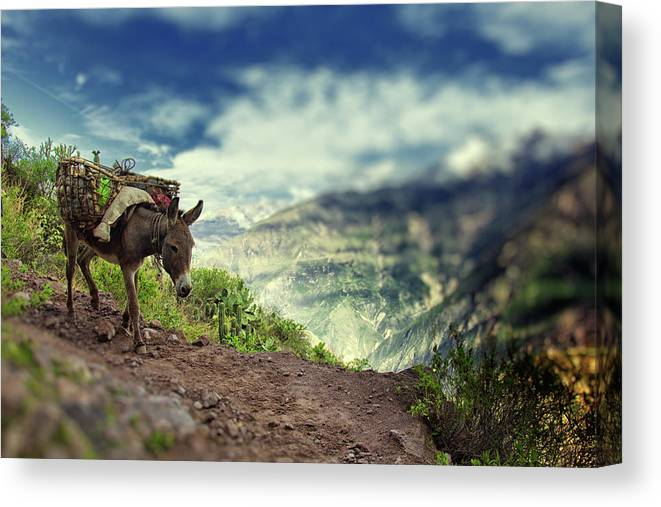 Working Animal Canvas Print featuring the photograph Mountain Donkey by By Kim Schandorff
