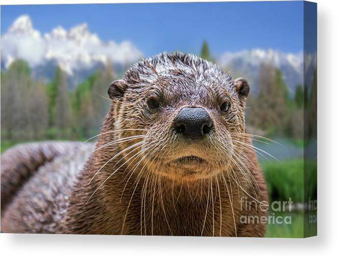 North American River Otter Canvas Print featuring the photograph North American River Otter by Arterra Picture Library