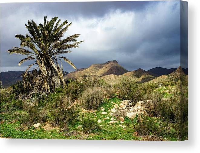 Palm Canvas Print featuring the photograph Palm Tree In Storm by Digby Merry