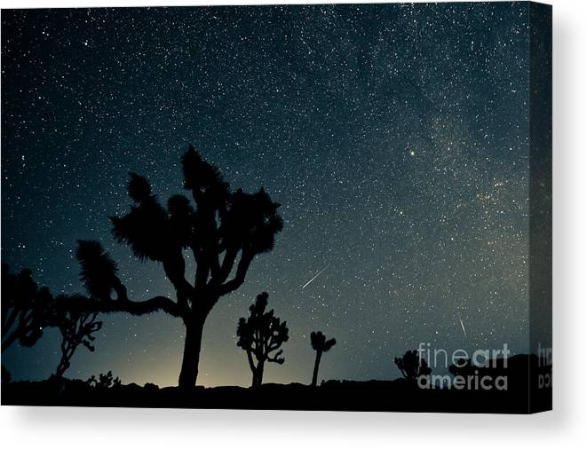 National Park Canvas Print featuring the photograph Perseid Meteor Shower by Kesterhu