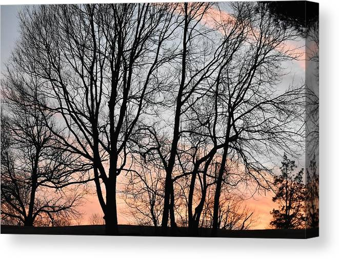 Trees Canvas Print featuring the photograph Pink Sky by Cassidy Marshall