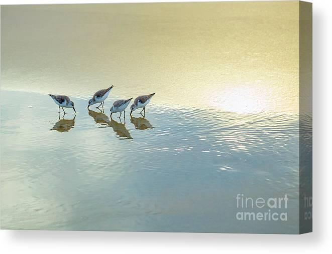 Nature Canvas Print featuring the photograph Sandpipers At La Jolla Shores Beach, La Jolla, California by Julia Hiebaum