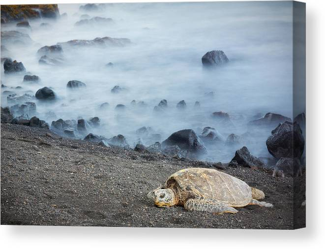 Sea Turtle Canvas Print featuring the photograph Sea Turtle by Nicole Young