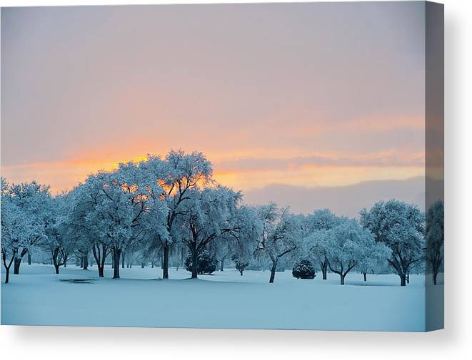Scenics Canvas Print featuring the photograph Snow Covered Trees At Sunset by Nancy Newell