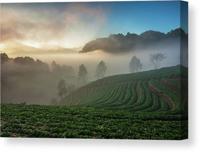 Tranquility Canvas Print featuring the photograph Strawberry Farm by Nutexzles