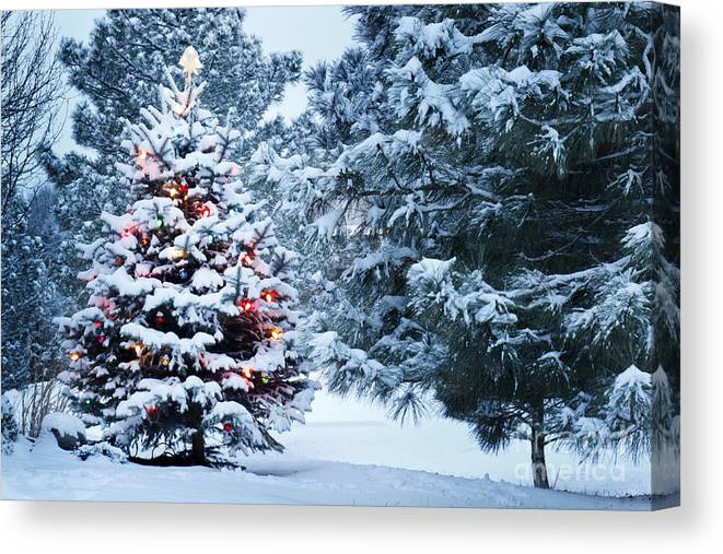 Pine Tree Canvas Print featuring the photograph This Snow Covered Christmas Tree Stands by Ricardo Reitmeyer