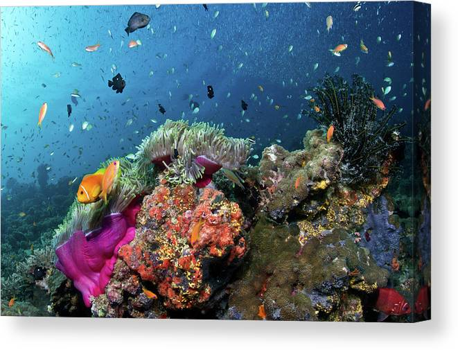 Underwater Canvas Print featuring the photograph Vibrant Lives by Lea Lee
