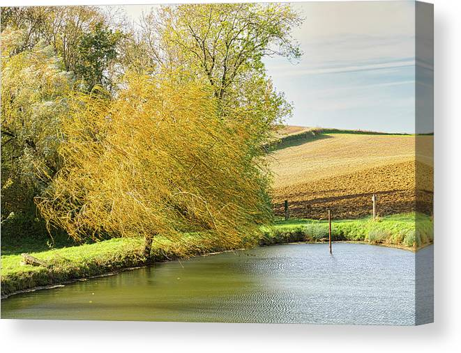 Wind Canvas Print featuring the photograph Wind In The Willow by Michael Briley