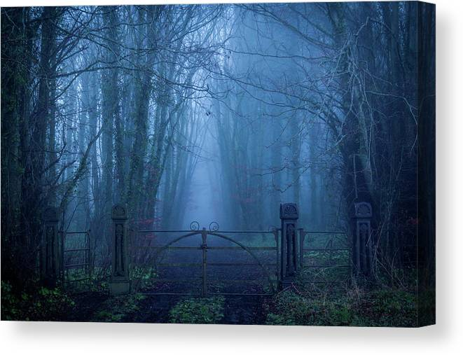 Enchanted Irish Forest by Fergal Gleeson