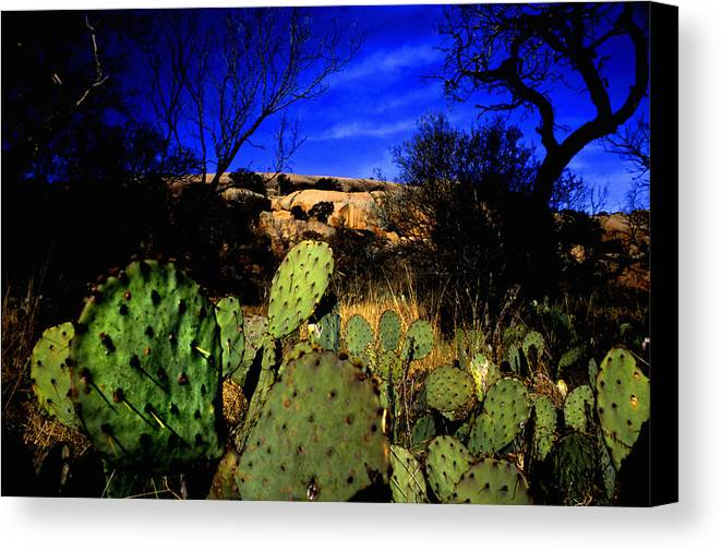 Landscapes Canvas Print featuring the photograph Prickly Pears Enchanted Rock Texas by Tom Fant