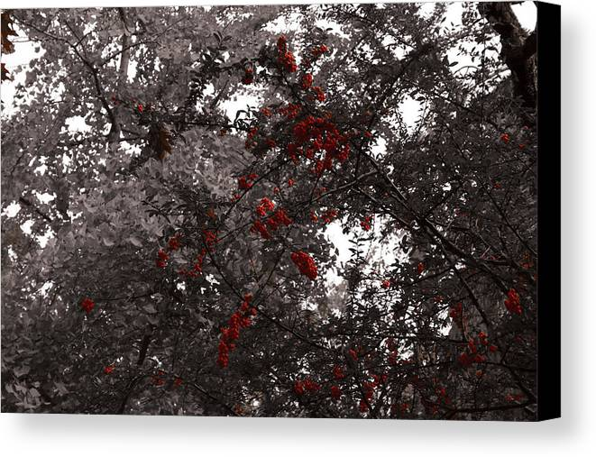 Nature Canvas Print featuring the photograph Berry Trees by Bill Ades
