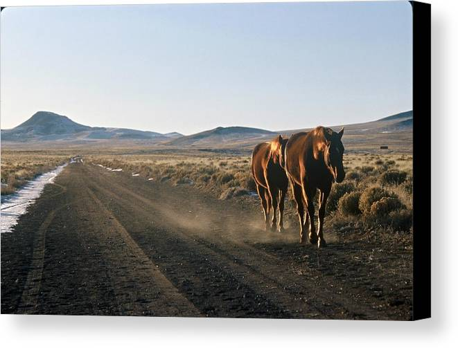 Horses Canvas Print featuring the photograph Horses Cruising by Lynard Stroud
